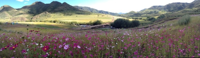 Lesotho Wild Flower Route